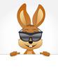 cooler Hase mit Sonnenbrille