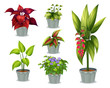 Six ornamental plants