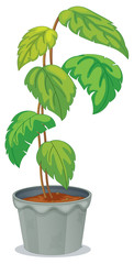 A green tall plant in a pot
