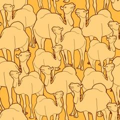 camel herd pattern