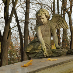 angel with rose  - gravestone on  Rakowice cemetery in Krakow
