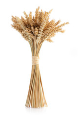 Sheaf of ripe wheat