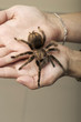 Arachnid Monster - Brown Spider wandering