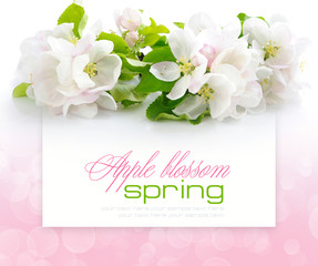 Apple blossom on a festive background with space for text