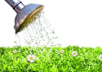 Rasenpflege im Garten