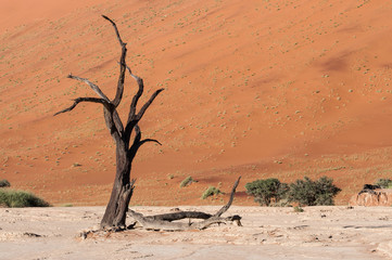 Dead tree in the Dead Valley in the Namib desert, Namibia