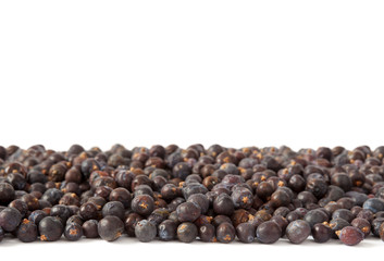 Juniper Berries Horizontal Group