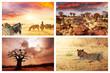 Fototapete Sonnenuntergang - Wild - Säugetiere