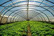 Leinwanddruck Bild - Greenhouse nursery for the cultivation of salad and other vegatable