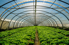 """Постер, картина, фотообои """"Greenhouse nursery for the cultivation of salad and other vegatable"""""""
