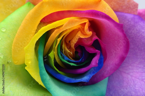 Foto op Aluminium Macro Close up of rainbow rose heart