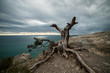 Picturesque landscape of snag against of scenic sky and sea