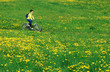 Walk in dandelions