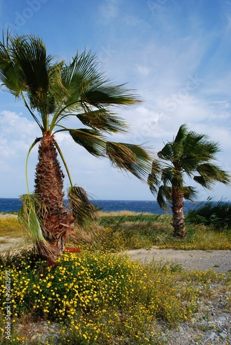 Palms and sea, italian riviera landscape, San Remo, Italy