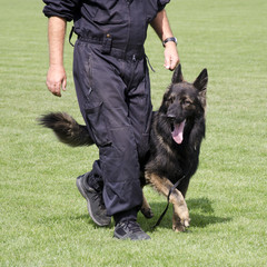 Police dog, German Shepard, at training.