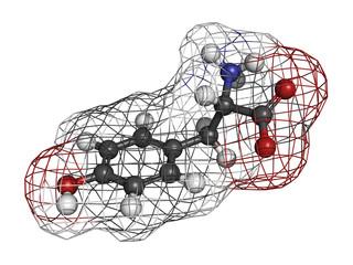 Tyrosine (Tyr, Y) amino acid, molecular model.