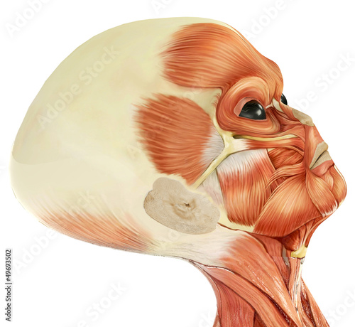 alien musculatory sytem close up