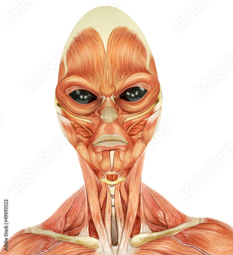 alien musculatory sytem id portraid
