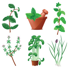 Herbs and mortar set