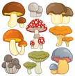 Mushroom theme collection 1