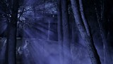Spooky forest with moonlight rays produced by fog.