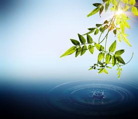 Fogliame e gocce che cadono in acqua con raggi di sole