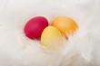 Drei Bunte Eier im Nest