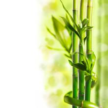 verdure bambou