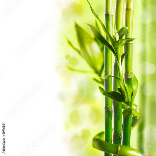 Green bamboo - 49716544