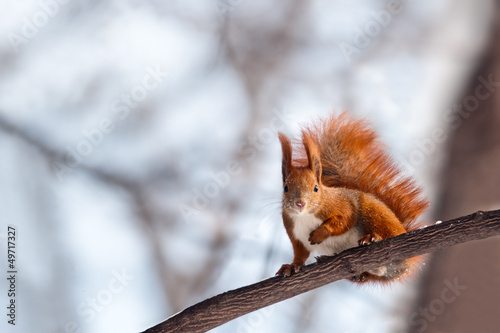 Foto op Canvas Eekhoorn squirrel