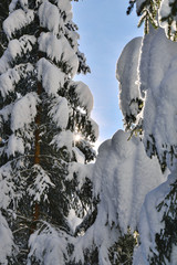 Sonnenstrahl fällt durch verschneite Äste
