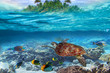 Leinwanddruck Bild Green turtle in the tropical water