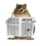 Funny chipmunk read newspaper