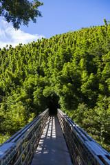 bridge to bamboo tunnel