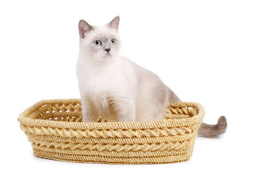 cat sits in basket