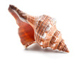 Seashell in close-up isolated on a white - 49741707
