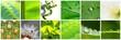 Fototapeten,collage,blatt,natur,pflanze