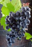 grappe de raisin rouge sur tonneau de vin