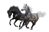 Two horses gallop on white background