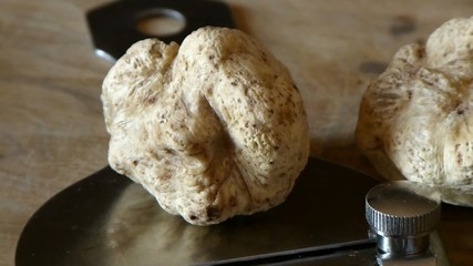 White truffles. Tartifo bianco d'Alba