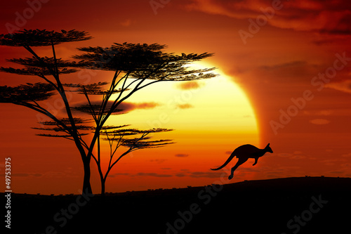 Deurstickers Oceanië kangaroo sunset australia