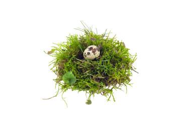 Wachtelei im Nest