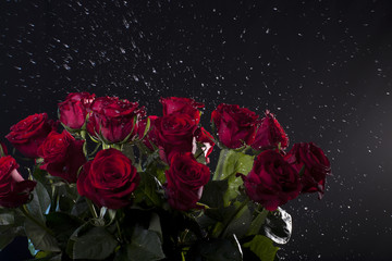 red roses with water splashes on dark background