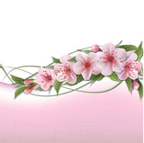 Fototapety Spring background with pink cherry flowers