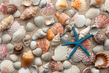 Sea shells and starfish on sand