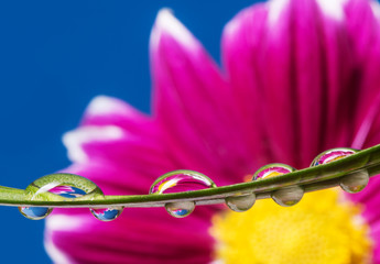 flower and water drops on a leaf