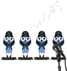 Bird manufactured boy band