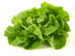 Lettuce head, isolated
