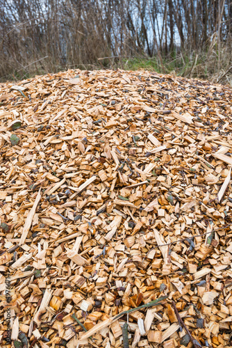 Woodchips after harvesting and shredding trees