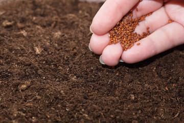 Hand seedling